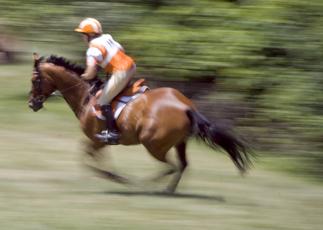 Cumbria Horse Trials Leaderboards (at 31st Aug 16)
